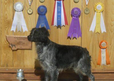 Best of Breed TopperLyn Fonzie EBGDC MT 2009 Regional Specialty
