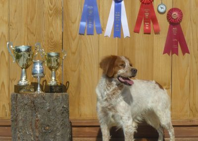 CH TopperLyn D'Artaganan Fall Trial 2009 Open Wild First Place, Liberated Bird Reserve, Champion Class,