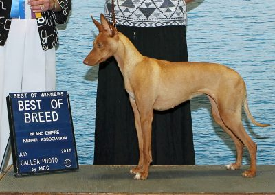 Cyrenensis Nicla Best of Breed Inland Empire KC Coeur d'Alene, ID