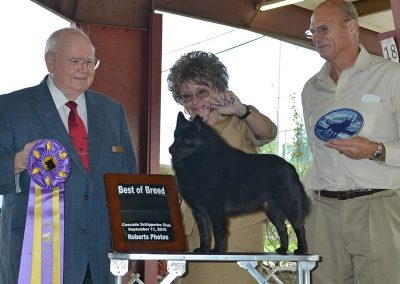 GRCH Delamer A Fish Tale, Best in Specialty Show, Cascade Schipperke Club