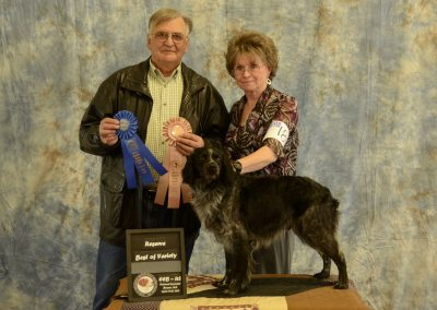 TopperLyn Fonzie Reserve Best Male of Variety CEB_US Nationals